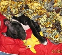 sleeping cute puppy dog